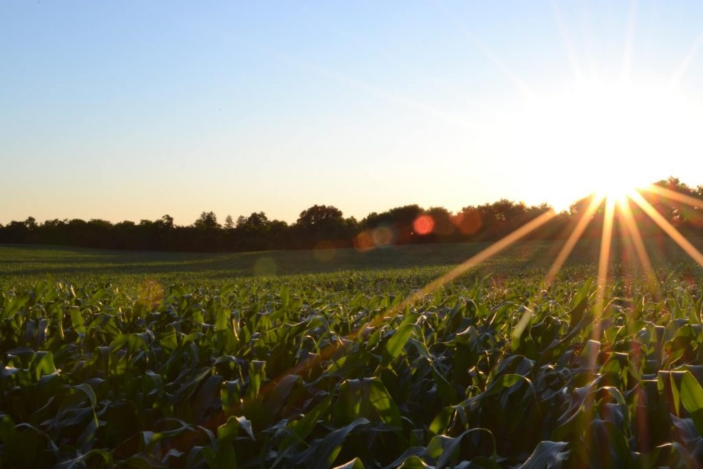a field with sunshine